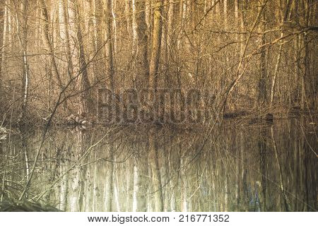 Spring forest. Deciduous trees and their reflection. Water