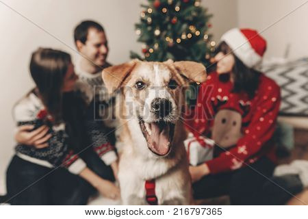 Happy Family In Stylish Sweaters And Cute Funny Dog Celebrating At Christmas Tree With Lights. Emoti