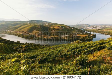 View of the Douro river, and vineyards are on a hills in Douro Valley, Portugal.