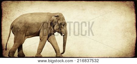 Grunge background with paper texture and walking elephant (Elephas maximus)