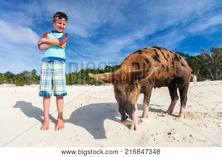 Boy with swimming pig of Exuma at beach