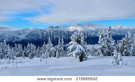 Canadian winter landscape with trees and mountains covered with snow and frost. Rain forest in Pacific Range mountains near Whistler Village Squamish and Vancouver. British Columbia. Canada.