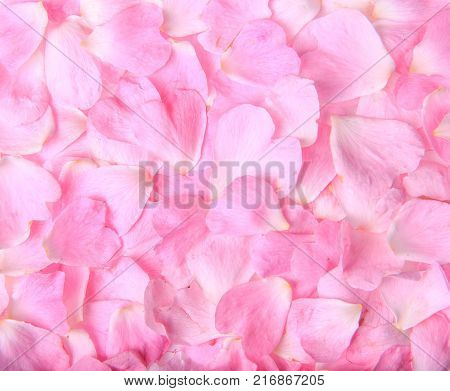 Background texture of beautiful delicate pink rose petals in a random pile