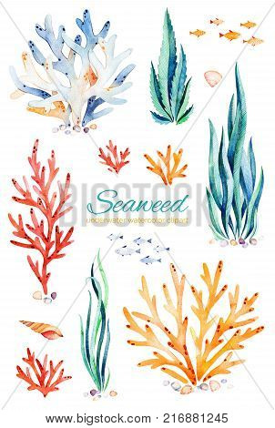 Underwater hand painted multicolored coral reefs, seashells and fishes