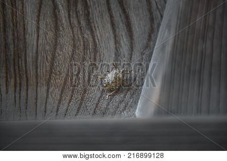 A BUG ON THE DOOR: Stink bug on wood door with wavy grain : A stink bug clings to a wood door. It has a large armor-like shell with wings underneath. The door has a bold and distinctive wavy grain texture.