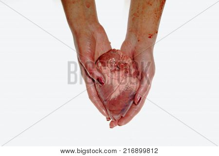 Torn bloodied hearts in the hands of a woman, valentine, halloween, on a white background.