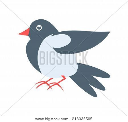 Closeup of pigeon with beak, claws and wings, grey bird, image placed in centerpiece on vector illustration isolated on white background
