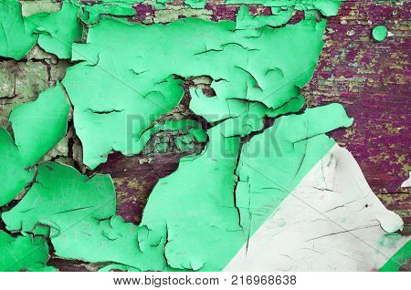 Texture background of green peeling paint on the wooden texture surface, peeling paint texture. Closeup of peeling paint on the wooden texture surface, peeling paint texture background