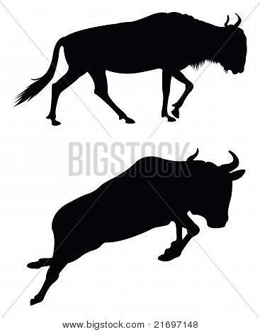 Antilope silhouettes