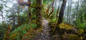 Panoramic view of the forest high in the mountains with a hiking trail. Ecotourism and travel concept. poster