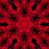 red rose mandala on the black background poster
