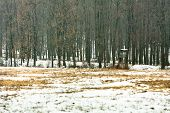 wildlife watching hut in winter forest with trees poster