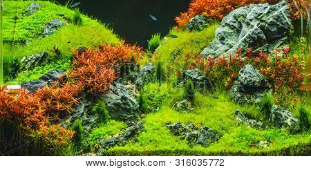 Planted Aquarium With Tropical Fish Cardinal Tetra (paracheirodon Axelrodi) The Most Popular Ornamen