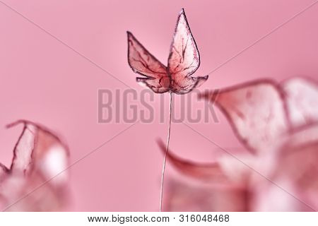 Delicate Pink Cake Decoration In The Form Of Butterflies.