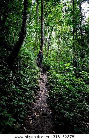 Beautiful Woman Hiking On Path In A Rainforest In Chiang Mai (thailand) With Copy Space