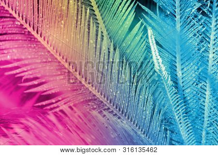 Close Up Of Exotic Tropical Leaves Colored In Neon Light