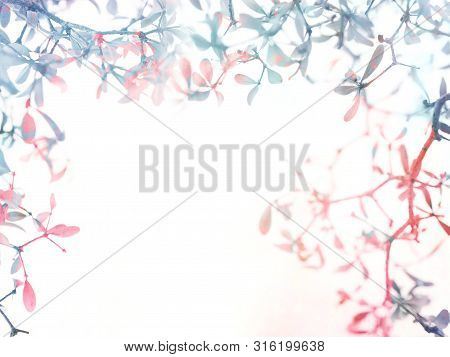 Floral Abstract Monotone Color Background. Close Up Small Leaves And Branches Over White, Vintage Fi