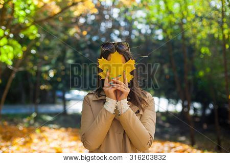 Beautiful Autumn Woman With Autumn Maple Leaves On Fall Nature Background.  Girl Hid Her Face With A