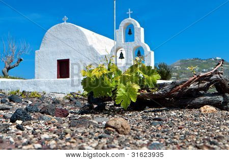 Grape field at Santorini in Greece.
