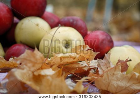 Close-up Of Red And Yellow Apples Lying In Yellow Fallen Maple Leaves, Concept Of Harvest And Thanks