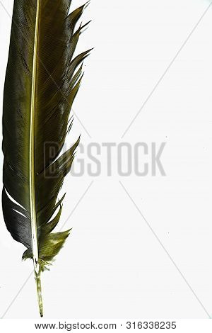 White Feathered Macaw Wings On A White Background
