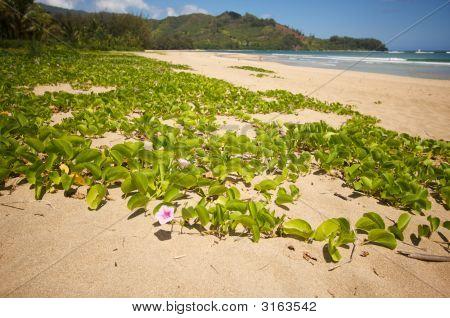 Flowers On The Beach Shoreline