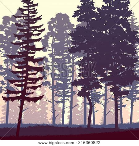 Square Illustration Coniferous Forest Of Freestanding Spruce And Pine Trees On Grass.