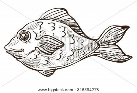 Fish Isolated Sketch, Bass Or Underwater Animal, Marine Symbol