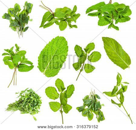 Set From Fresh Green Mint Herbs Isolated On White Background