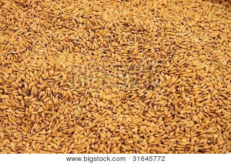 Grain on sale