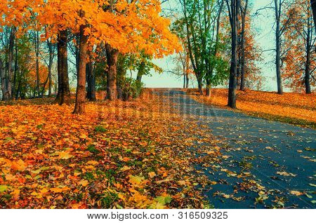 Fall landscape - yellowed fall trees and fallen autumn leaves in city park fall alley in sunny evening. Picturesque park fall scene. Fall colorful landscape, sunny fall nature