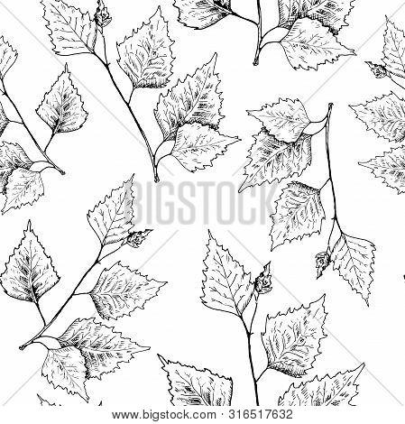 Birch Leaves Pattern. Hand Drawn Black Birch Tree Branches, Birch Leaves.