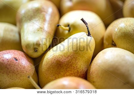 Macro Photo Food Fruit Green Pears. Texture Background Of Fresh Green Pears. Image Of Fruit Product