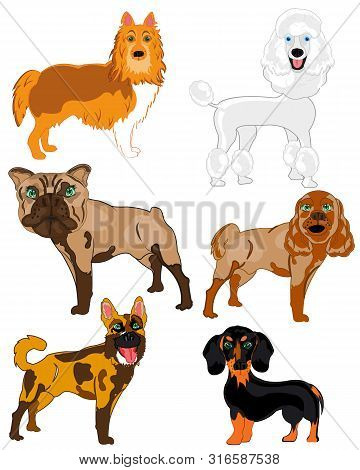 Vector Illustration Of The Dogs Of The Varied Sorts