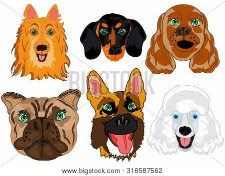 Vector Illustration Portrait Dogs Of The Varied Sorts