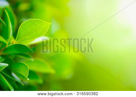 Green Leaf On Blurred Greenery Background. Beautiful Leaf Texture In Nature. Natural Background. Clo