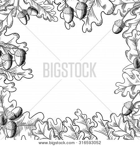 Vector Oak Leaf And Acorn Drawing Frame. Autumn Elements.