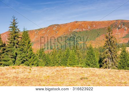 Beautiful Countryside With Forest On The Hills. Autumn Scenery With Spruce Trees In Mountains In Mor