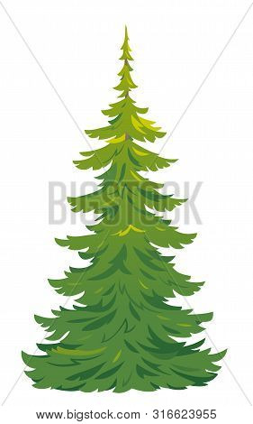 One Green Tall Spruce Tree Illustration, European Spruce Evergreen Coniferous Tree In Side View Isol