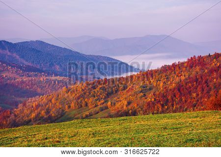 Misty Autumn Mountain Landscape At Dawn.  Forest On Hills In Fall Foliage. Distant  Valley Full Of F