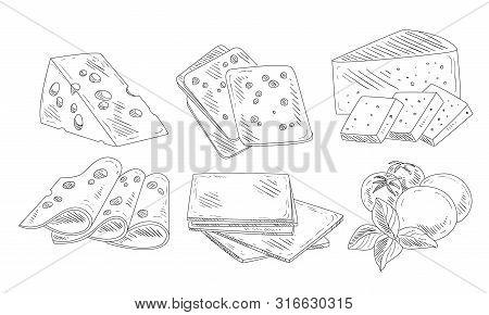 Hand Drawn Different Type Of Cheese Set, Organic Dairy Product, Edam, Maasdam, Mozzarella Cheese Wit