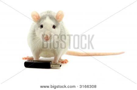 Rat End Usb