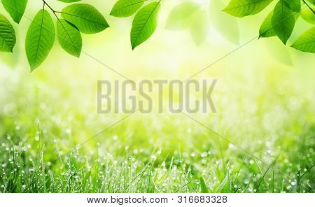Natural Spring Summer Green Scenic Background With Frame Of Grass With Dew And Leaves In Nature. Sun