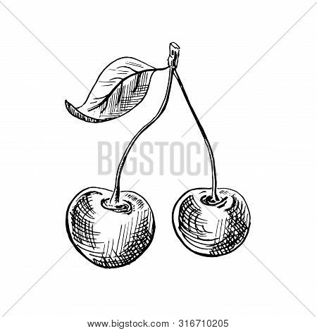 Cherry Sketch. Hand-drawn Black Two Cherry Berries With A Leaf, Isolated On White Background. Sketch