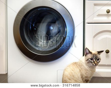 Cat And Washing Machine. Domestic Pets Life