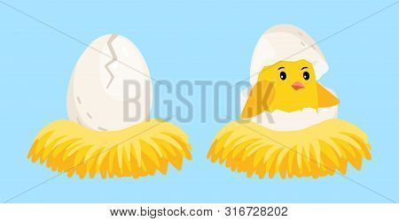 Newborn chick. Cartoon egg and hatched chick with eggshell on head in the nest vector illustration. Eggshell chick in nest, newborn baby bird poster