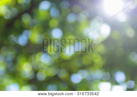 Blurred Green Tree Leaves With Bokeh Background, Sunny Spring Forest Backdrop. ( Green Bokeh Backgro