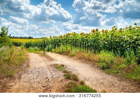 Landscape Country Road On A Field Blooming Beautiful Sunflower. Sunflowers Field And Blue Sky With L