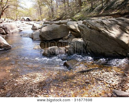 Rocky stream along a forest of trees