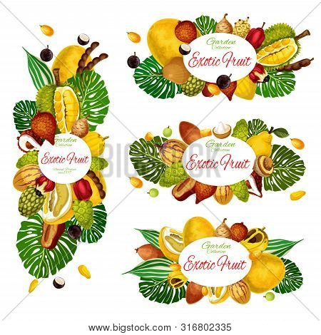 Exotic Fruits And Berries Vector Design Of Natural Food And Tropical Palm Leaves. Asian Pomelo, Jack